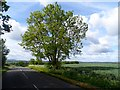 TL1335 : Ash tree, Meppershall Road by Bikeboy