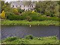 NJ8715 : Mute Swan on the Dee by Stanley Howe