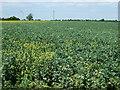 TL2462 : Crop field, Yelling by JThomas