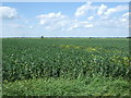 TF4112 : Crop field north of Goredike Bank by JThomas