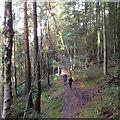 SJ9665 : Northeast on the Dane Valley Way by Robin Stott