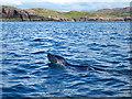 NB9511 : Grey seal and Eilean Mullagrach : Week 27
