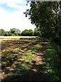 TL0763 : Footpath towards Keysoe by Dave Thompson