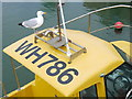 SY4690 : Seagull on Fishing Boat WH786 : Week 28