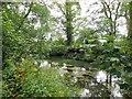 TQ0207 : River Arun near Wetlands Centre, Arundel by Paul Gillett