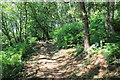 SJ5175 : Broadleaved Woodland on Woodhouse Hill by Jeff Buck