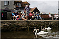 SZ3295 : Swan Family at Lymington by Peter Trimming