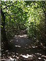 TL0652 : Path in Putnoe Wood by Adrian Cable