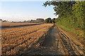 TL9139 : Wheat field being harvested, near Goulding's Farm, Newton by Roger Jones