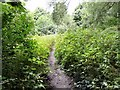 SJ9595 : Overgrown footpath by Gerald England