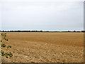 TQ9289 : Stubble field by Robin Webster