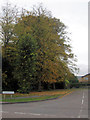 SP9111 : Trees at the entrance to Buckingham Road, Tring by Chris Reynolds