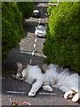 SX9265 : Big cat blocks road! : Week 33