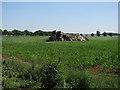 TL5071 : Broken crates in a field by Hugh Venables
