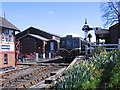TQ8833 : Tenterden station in the daffodil season by Stephen Craven