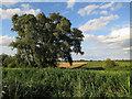 TL5366 : Swaffham Bulbeck Fen by Hugh Venables