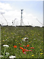 ST7669 : Poppies by the mast by Neil Owen