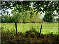 SJ4572 : Fence and Grazing Land near Trafford Hall by David Dixon