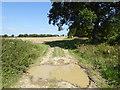 TQ1618 : Farm track enters field by Shazz