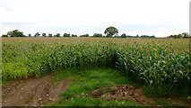 SJ6341 : Crop north of Heywood Lane by Jonathan Billinger