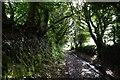 SW7541 : United Downs: Farm track by Michael Garlick