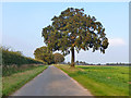 TL6055 : Straight road with trees by Robin Webster