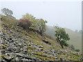 SD7770 : Hillside below White Stone by Mick Garratt