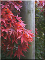 SD4674 : Red leaves and telegraph pole by a Silverdale footpath by Karl and Ali
