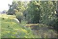 TQ5445 : River Medway by N Chadwick