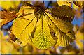 NT2575 : Autumn leaves, Warriston cemetery : Week 42