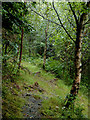 SN5649 : Woodland track north-west of Lampeter, Ceredigion by Roger  Kidd