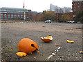 SE2933 : Pumpkin litter : Week 44