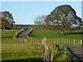 NZ1185 : Driveway to Needless Hall : Week 44
