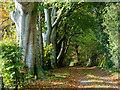 NH6853 : Public road to Bay Farm at Chapelhead : Week 44