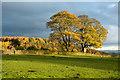 NZ1739 : Autumnal trees near to High Wooley : Week 45