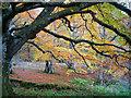 NH5857 : Close to the tarn in Drummondreach Oak Wood : Week 45