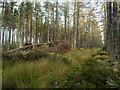 NH7262 : Track in Grey Cairn Wood : Week 46