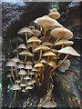 SD5085 : Fungi, Levens Park : Week 46
