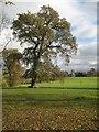 SO8845 : Autumn tree, Croome Park : Week 46