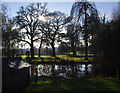 SJ6555 : Pond, Rookery Hall by Ian Taylor