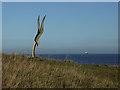 NZ4836 : Bird by the sea : Week 47