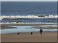 NZ4837 : Dog walker on Crimdon Beach : Week 47