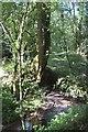 SS6428 : Stream, Rubble Hills by Derek Harper