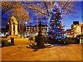 SD8010 : Kay Gardens at Christmas by David Dixon