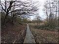 SJ7453 : Duckboarded footpath near Crewe by Jonathan Hutchins