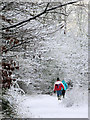 SP9313 : Walking Round the College Lake Nature Reserve in the Snow by Chris Reynolds