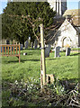 ST6264 : Flowering memorial by Neil Owen