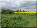 TL1966 : Oilseed rape by Leaden's Lane by Hugh Venables