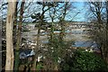 SX9372 : View in Homeyards, Shaldon by Derek Harper