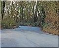 ST0613 : Deer, Crossing Clay Lane by Roger Cornfoot